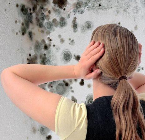 Фото - Как убрать плесень со стен квартиры?