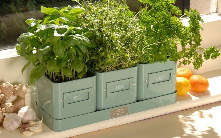 Фото как выращивать зелень на подоконнике зимой