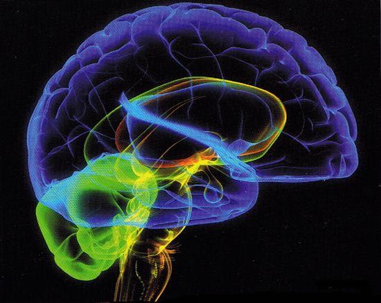 Фото - Работа мозга или Как влияют цитрусовые