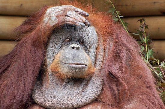 Фото - Береги голову смолоду: признаки сотрясения мозга