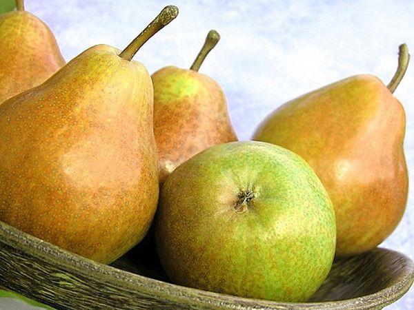 Фото - Диета для похудения и груша: какая связь?