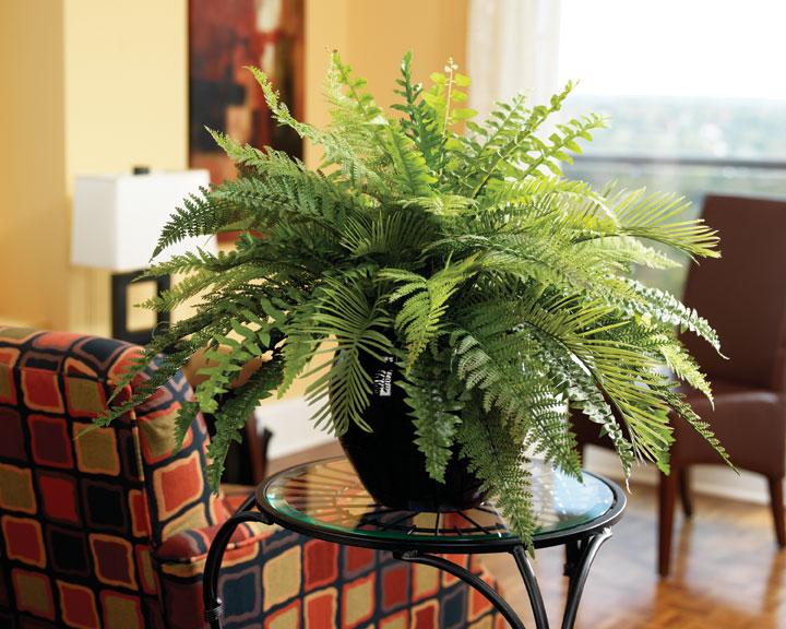 размеры полезные цветы для квартиры с фото отвечает вопрос потому