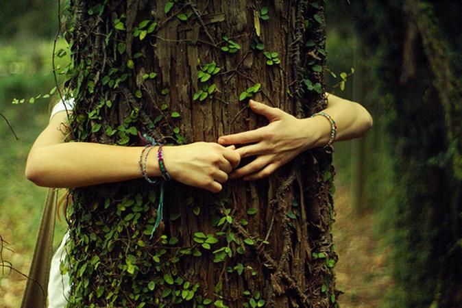 Фото - Энергия дерева для человека: как зарядиться энергией от деревьев?
