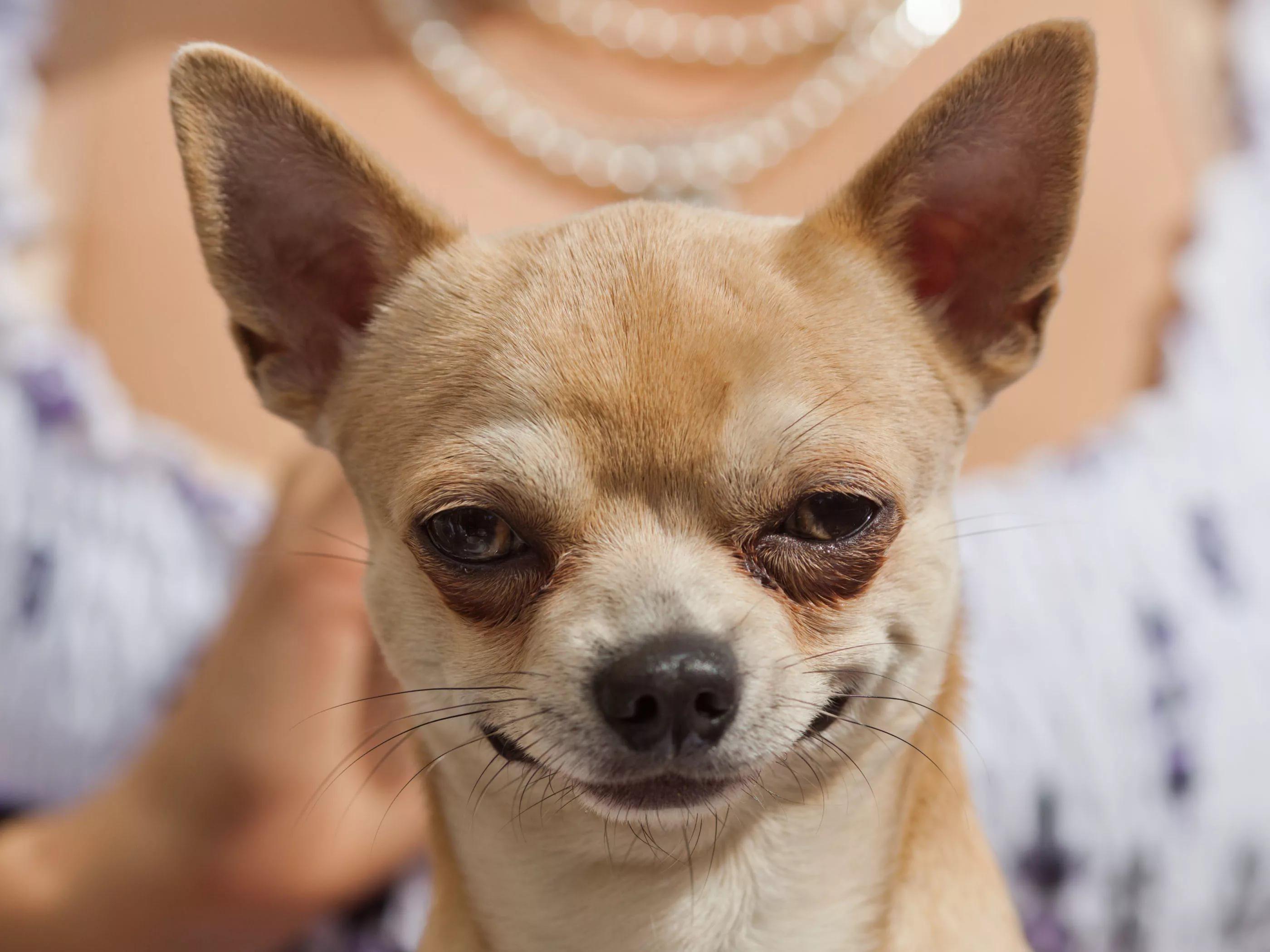 Фото на тему: Заниматься любовью дома, когда смотрит собака. Как?