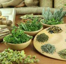 Фото - Травы для похудения