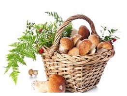Фото - «Домашние» грибы на садовом участке