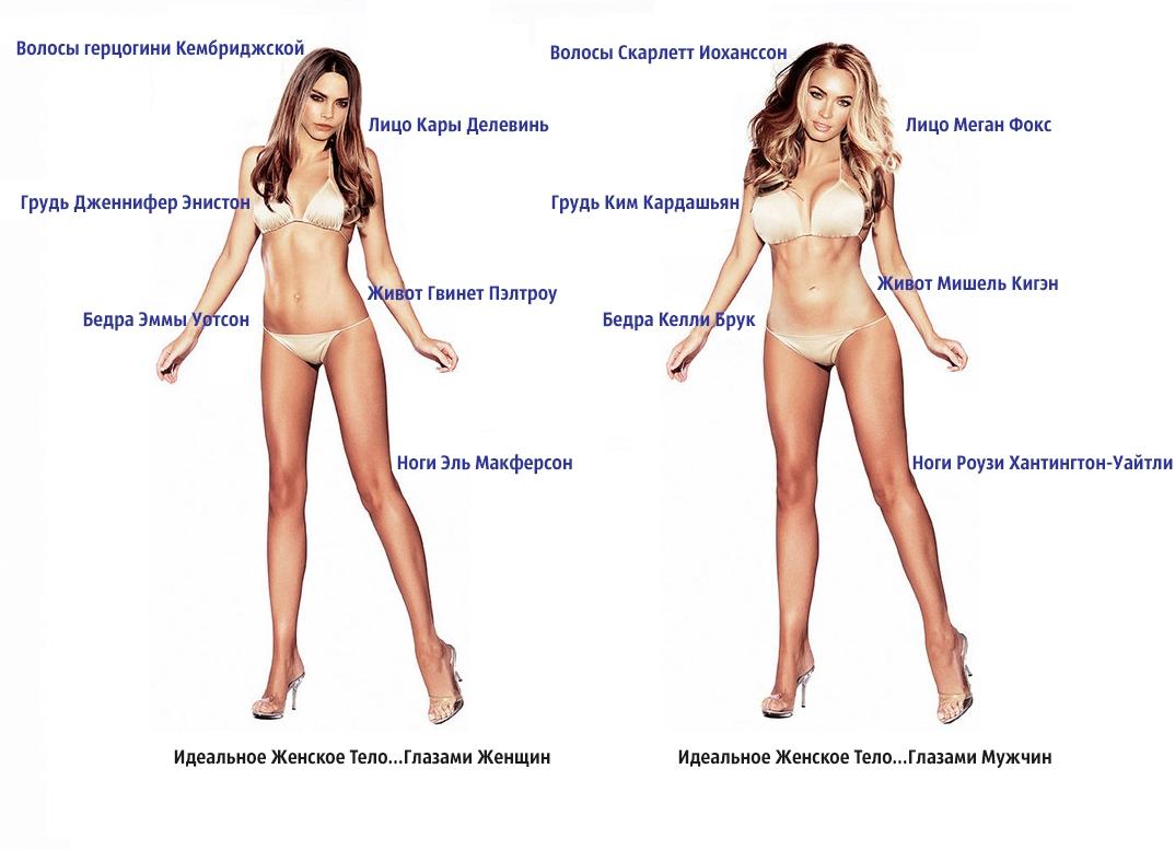 Сексуальное обследование мужского тела