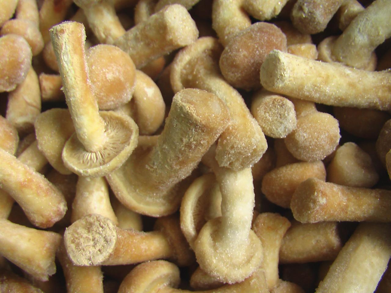 Курсовая работа блюда из грибов сложного приготовления