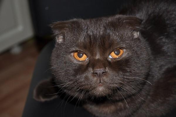 почему от кота пахнет тухлым