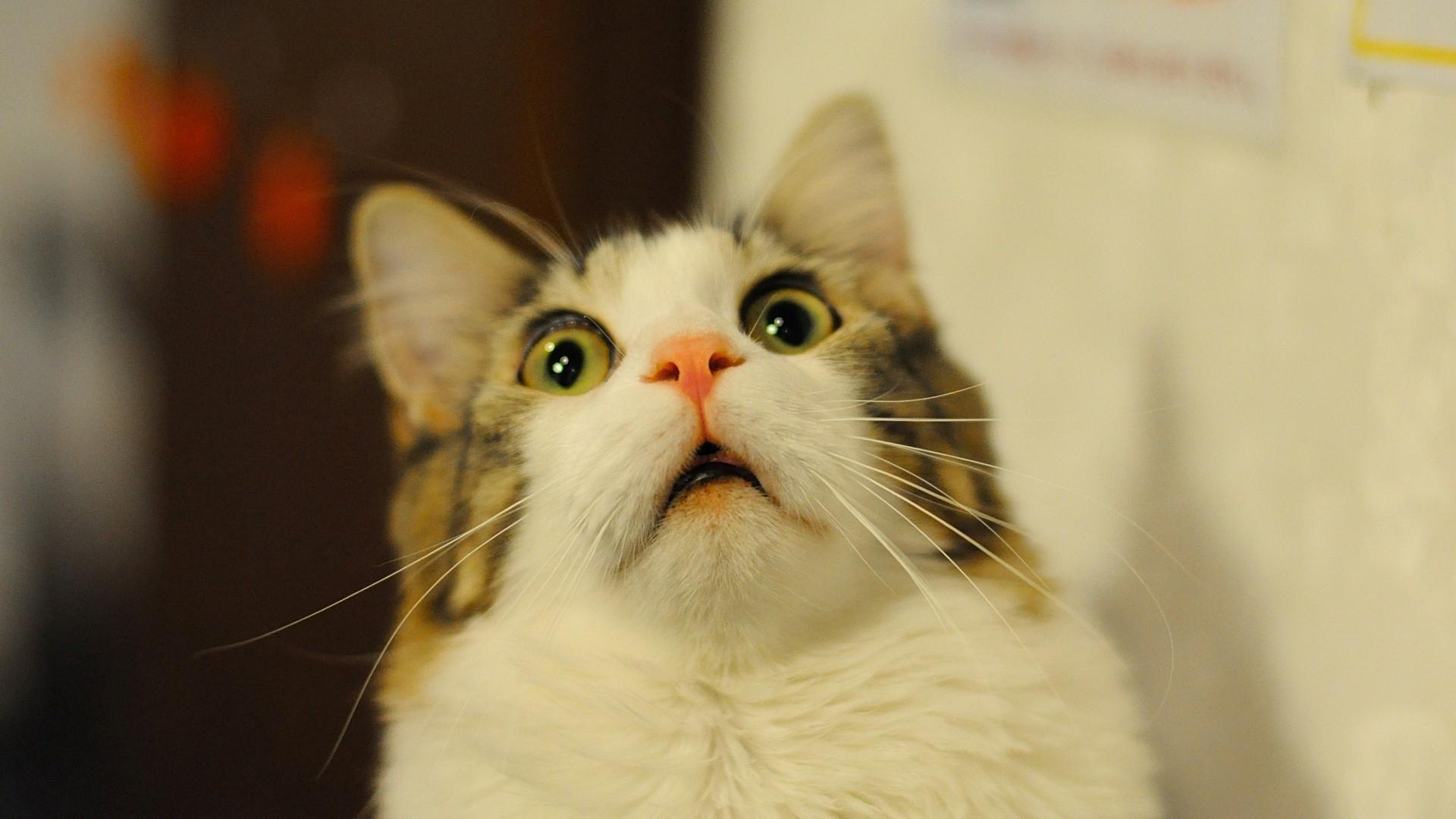 Почему моча воняет сильно у кота