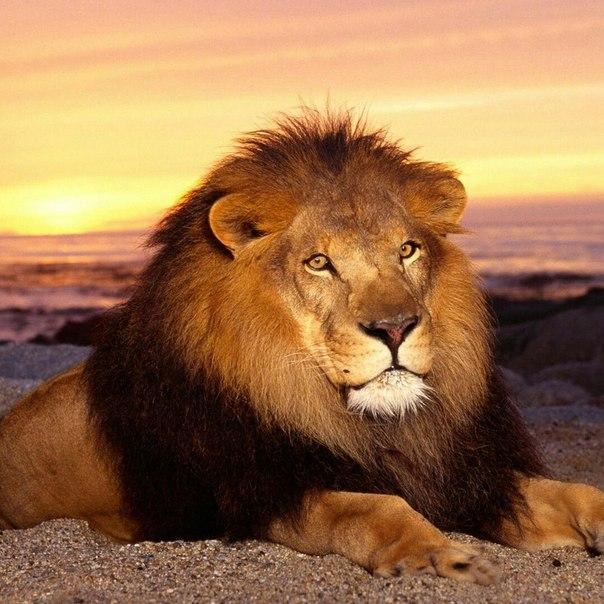 Что нравиться мужчине льву в сексе