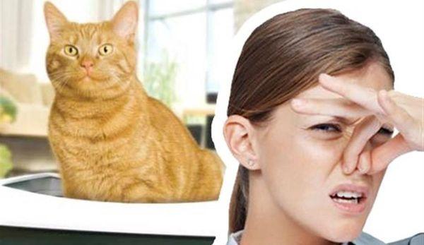 Как убрать запах кошки с одежду