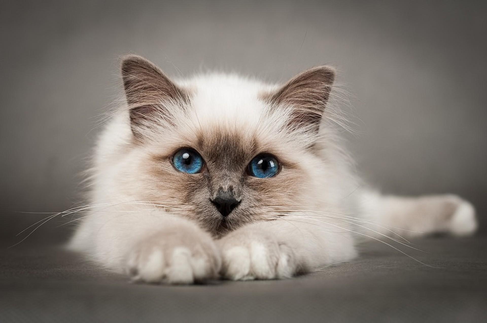 Картинка по теме: Чем кормить кастрированного кота?