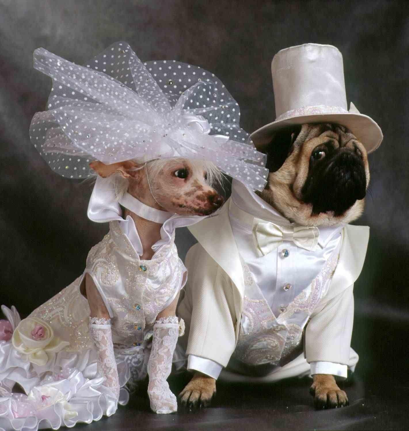 Картинка по теме: Смешная одежда для животных своими руками