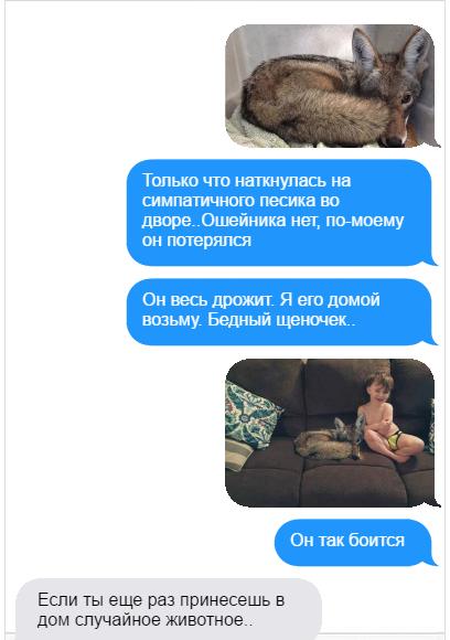 Фото на тему: Про любовь к животным и женскую логику: смешная история про койота!