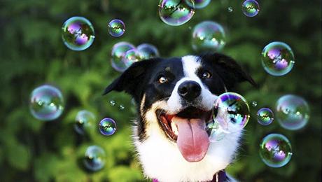 Фото и отзывы о Красивое шоу мыльных пузырей. Видео