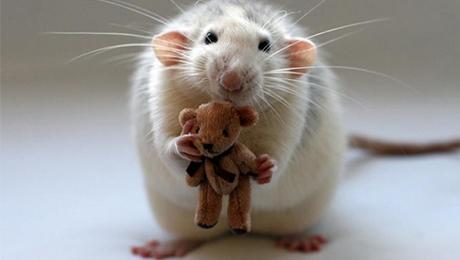 Фото и отзывы о История одной крысы