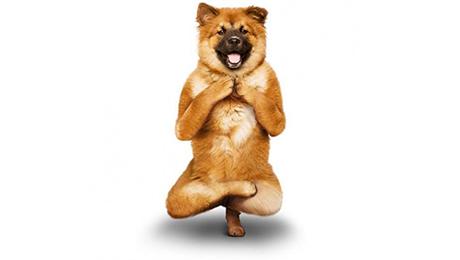 Фото и отзывы о Йога: советы для начинающих