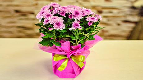 Фото и отзывы о Домашний цветок в подарок. Как реагировать?